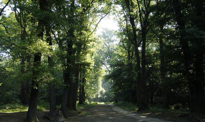 Bois de Verrières